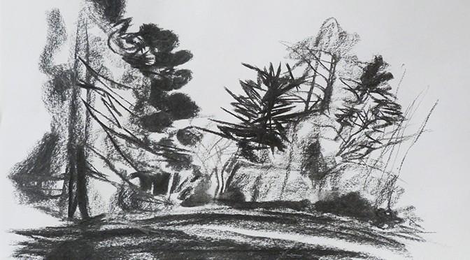 Fusain, jardin du Thabor, Rennes, hivers 2014
